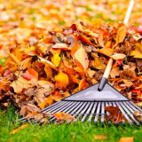 Spring and Fall Clean-Ups